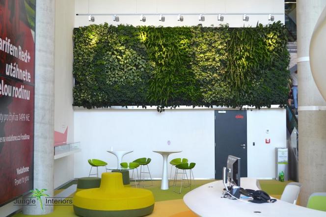 Rostliny v interiéru 4