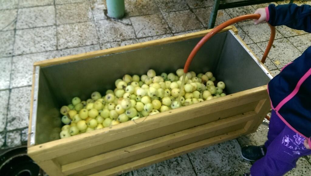 Mytí jablek