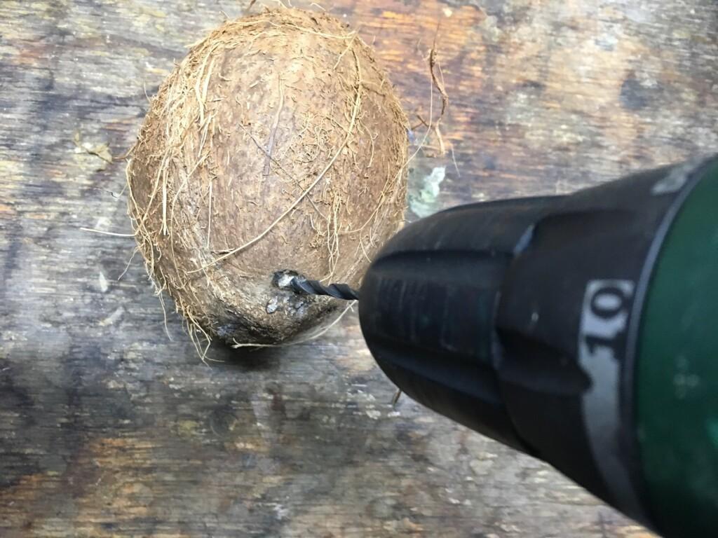 Navrtání kokosu