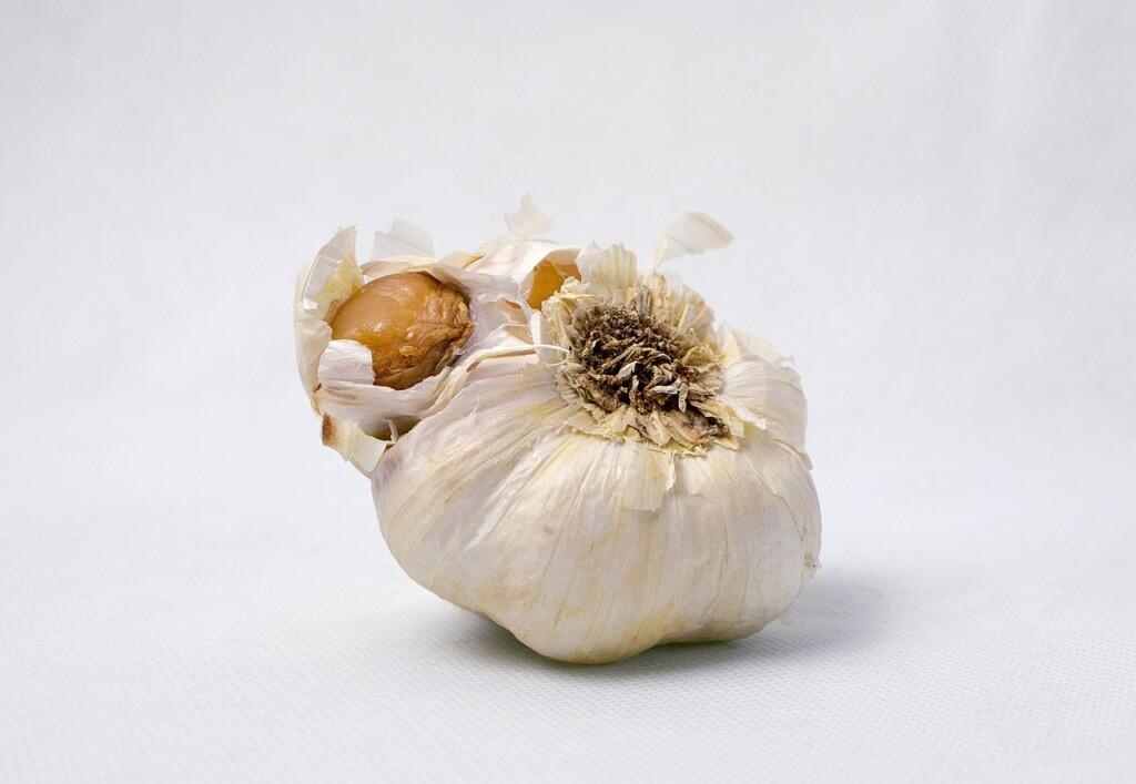 Shnilý česnek
