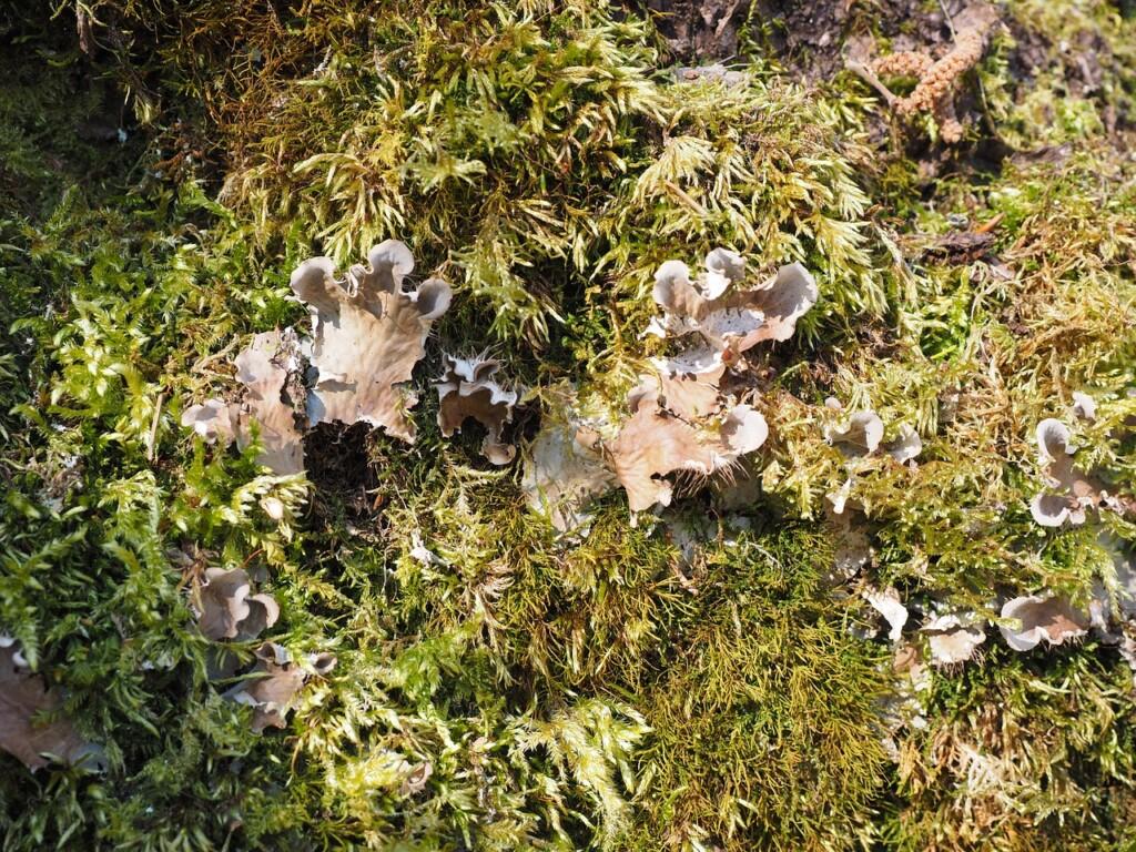 Mycorhiza