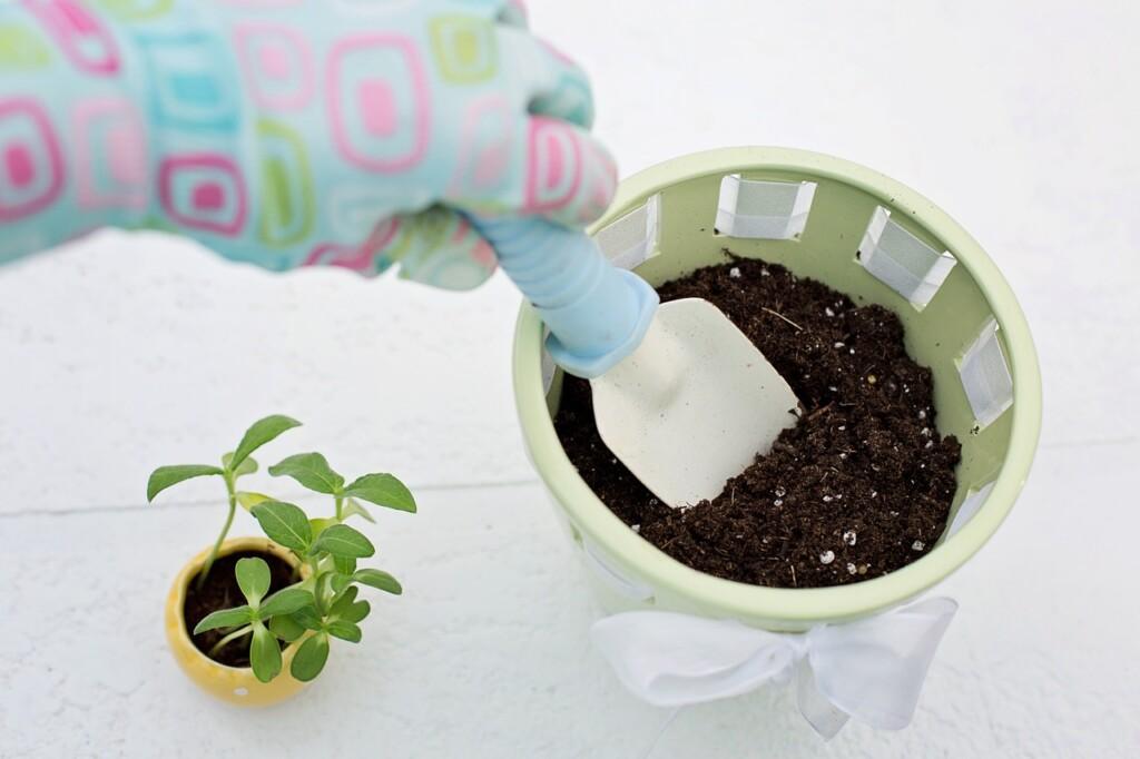 Výsadba bylinek