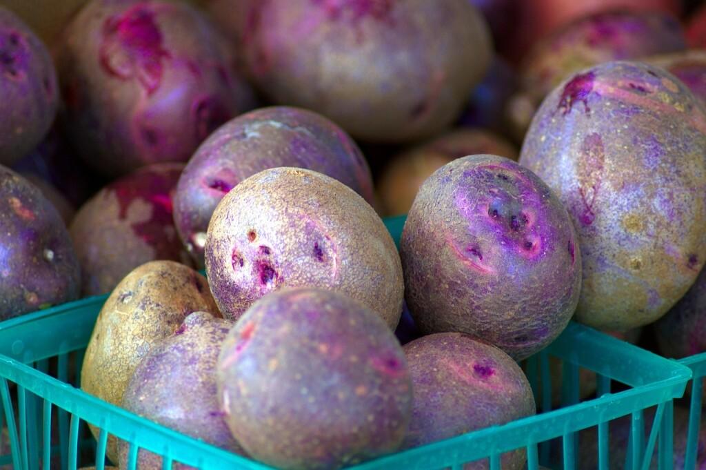 Modrofialové brambory