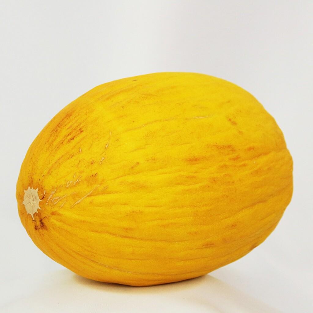 Meloun žlutý