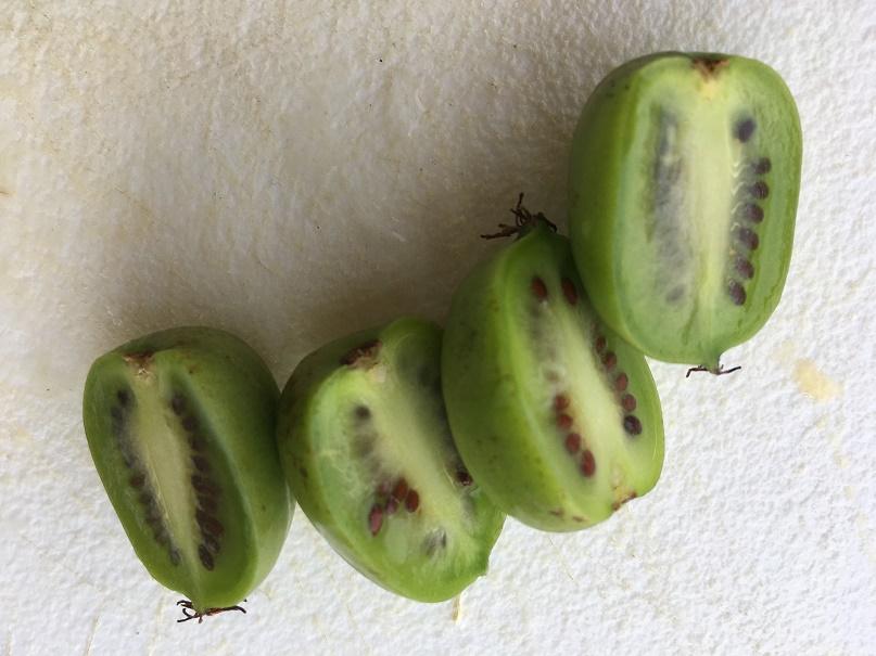 Minikiwi