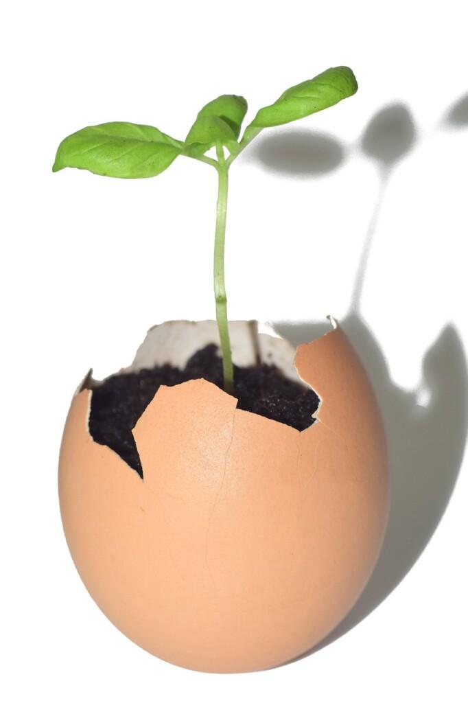 Skořápky vajec