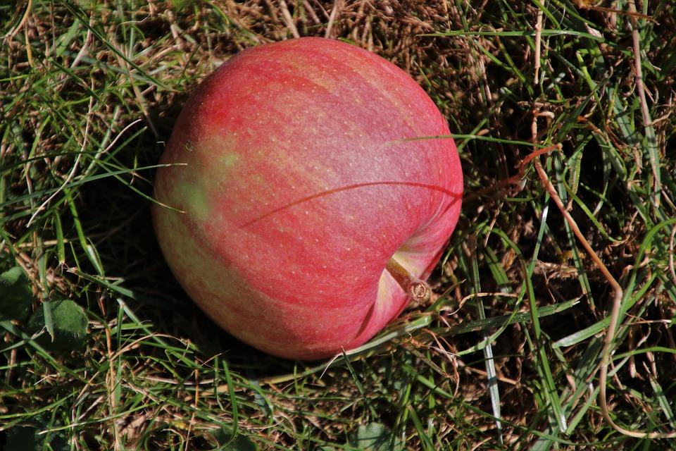 Skladování jablko