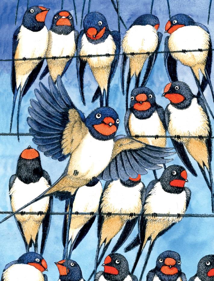 Vlaštovky