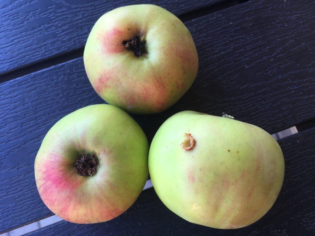 Napadená jablka