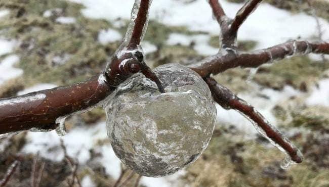Ledové jablko