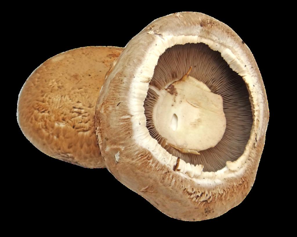 Žampion Portobello