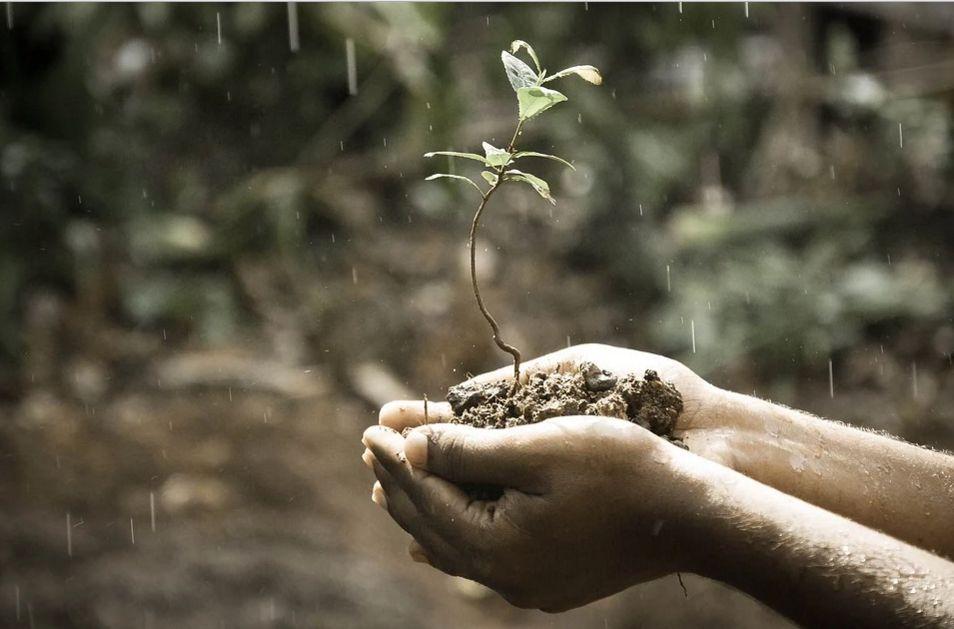 Klíčení rostlin