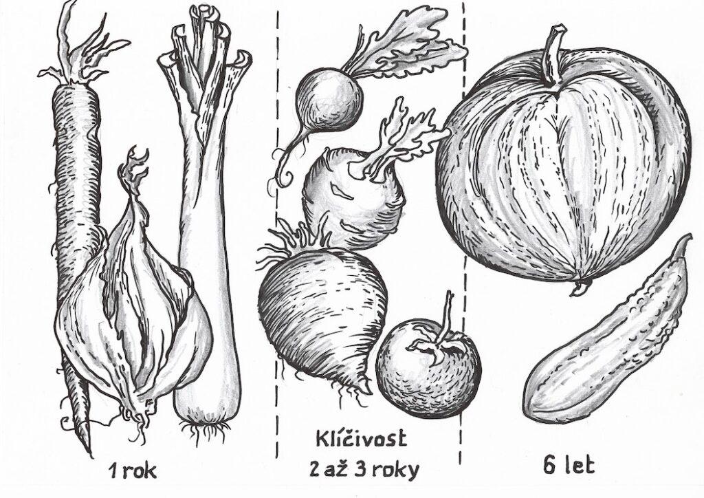 Klíčivost rostlin