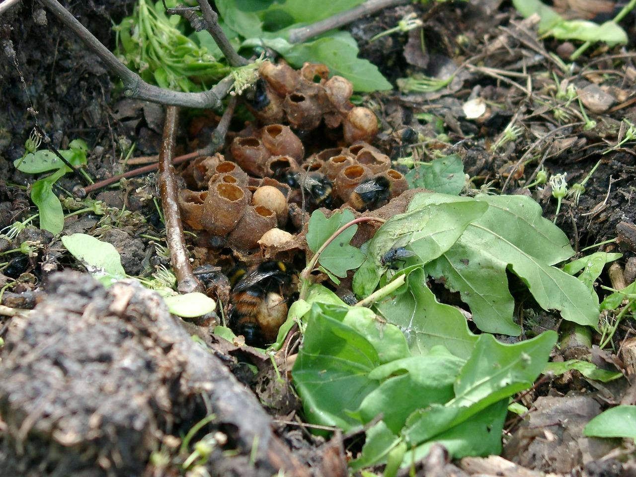 čmeláci hnízdo