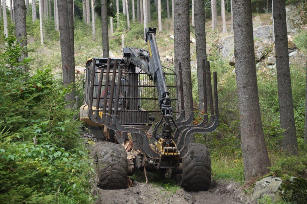 Těžba lesů