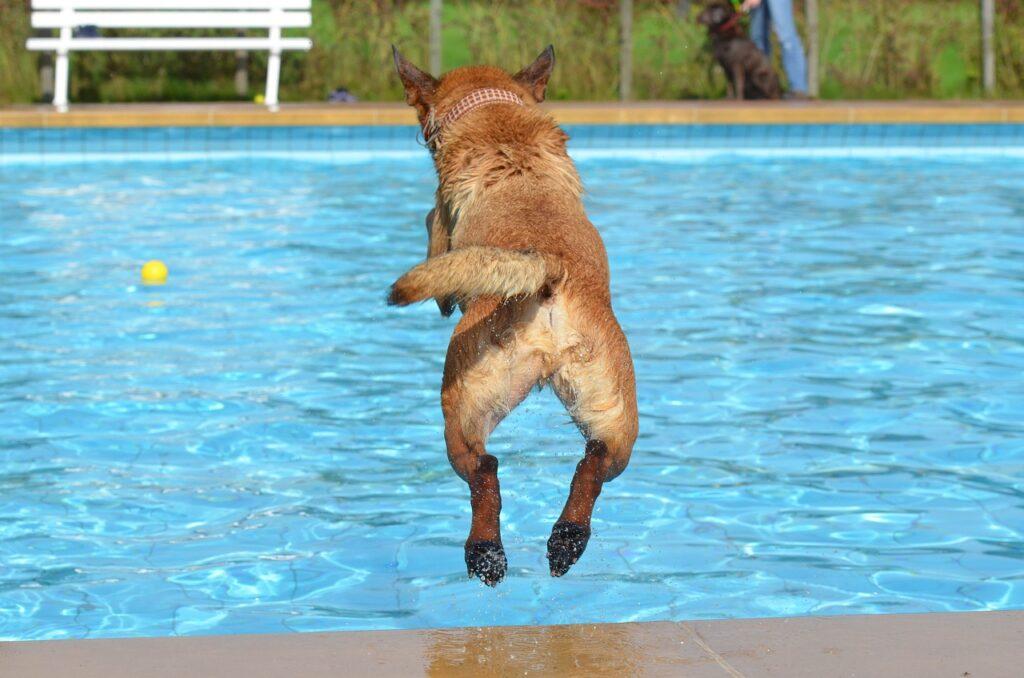 Pes plave